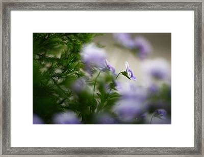 Butterfly's Dream 4 Framed Print by Afrison Ma