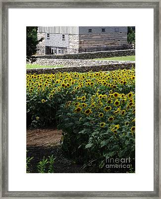 Buttonwood Framed Print by Michelle Welles