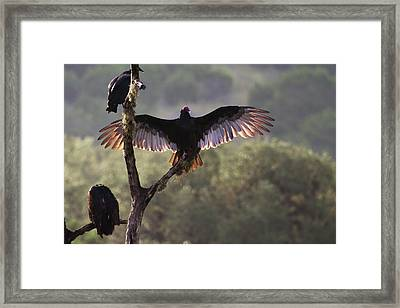 Buzzards' Roost Near Leaky, Texas Framed Print by Larry Ditto