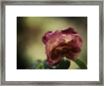 By Any Other Name Framed Print by Richard Cummings