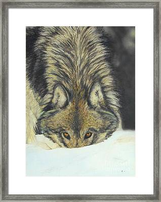 Bytor - Watercolor Framed Print by GD Rankin