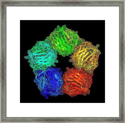 C-reactive Protein Framed Print by Alfred Pasieka