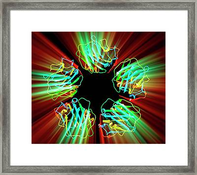 C-reactive Protein Framed Print by Pasieka