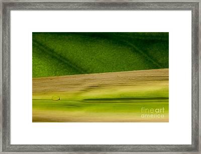 C Ribet Orbscape Seasons Ebb Framed Print by C Ribet