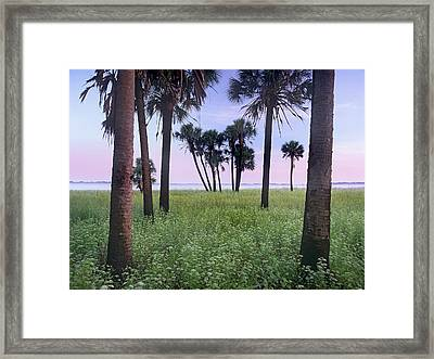 Cabbage Palm Meadow Florida Framed Print by Tim Fitzharris