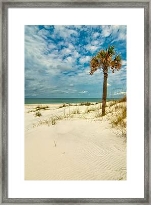 Cabbage Palm On St. Joseph Peninsula Framed Print by Rich Leighton