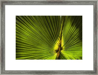 Cabbage Palm Framed Print by Rich Leighton