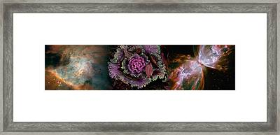 Cabbage With Butterfly Nebula Framed Print by Panoramic Images
