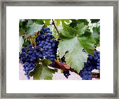 Cabernet Grapes Framed Print by Jon Neidert