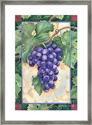 Cabernet Grapes Framed Print by Paul Brent