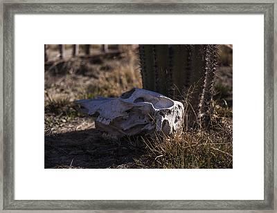 Cactus And Skull Framed Print by Amber Kresge