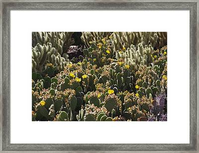 Cactus Carpet Framed Print by David Rizzo