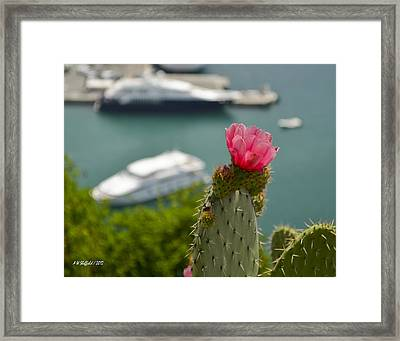 Cactus Flower Above The Port Of Nice Framed Print by Allen Sheffield