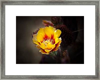 Cactus Flower Framed Print by Swift Family