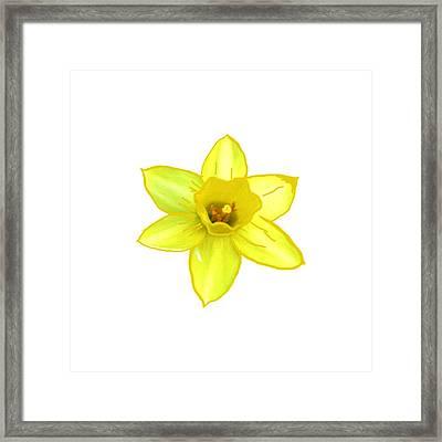 Cactus Flower Yellow  All The Way Smiles By Navinjoshi  Artist Framed Print by Navin Joshi