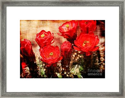 Cactus Flowers Framed Print by Julie Lueders
