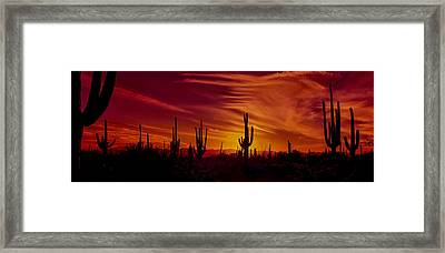 Cactus Glow Framed Print by Mary Jo Allen