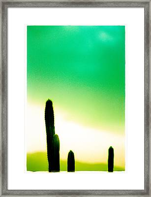 Cactus In The Morning Framed Print by Yo Pedro