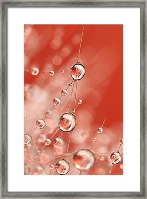 Cactus Rose Drops Framed Print by Sharon Johnstone