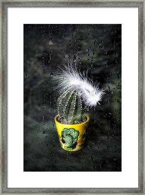 Cactus With Feather Framed Print by Joana Kruse
