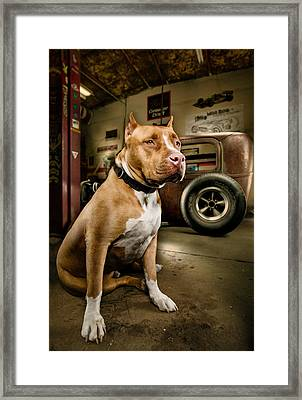 Caesar At Millers Chop Shop Framed Print by Yo Pedro