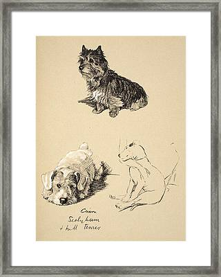 Cairn, Sealyham And Bull Terrier, 1930 Framed Print by Cecil Charles Windsor Aldin
