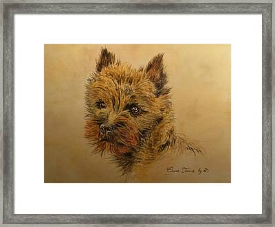 Cairn Terrier Dog Framed Print by Juan  Bosco
