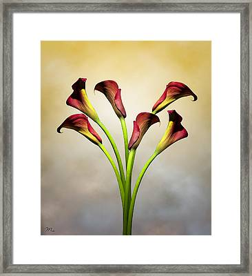 Cala Lily 5 Framed Print by Mark Ashkenazi