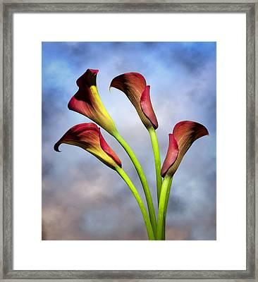 Cala Lili 6 Framed Print by Mark Ashkenazi