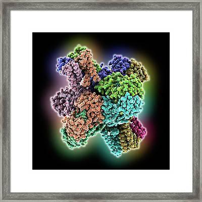 Calcium-activate Potassium Channel Framed Print by Laguna Design