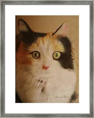 Calico Cat Framed Print by Savanna Paine