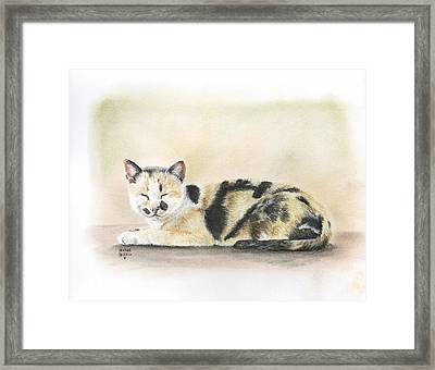 Calico Framed Print by Heather Gessell
