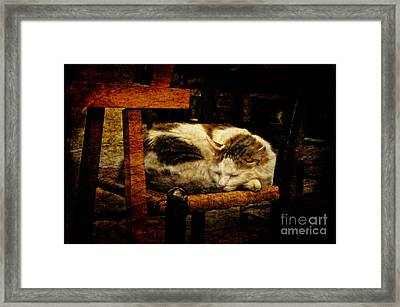 Calico Framed Print by Lois Bryan