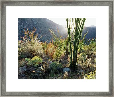 California, Anza Borrego Desert State Framed Print by Christopher Talbot Frank