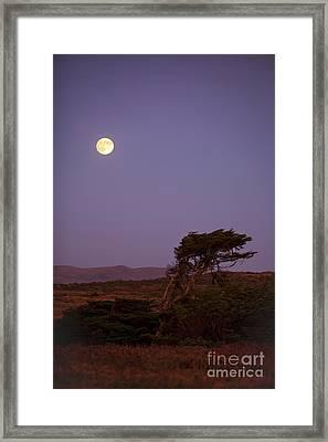 California Moon Framed Print by Diane Diederich