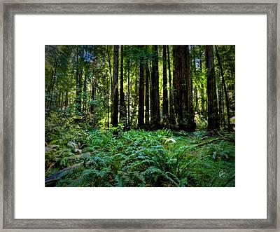 California - Muir Woods 007 Framed Print by Lance Vaughn