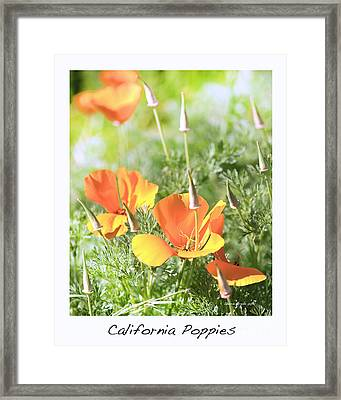 California Poppies Framed Print by Artist and Photographer Laura Wrede