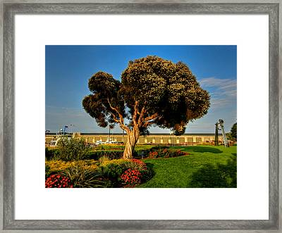 California - San Francisco - The Embarcadero 001 Framed Print by Lance Vaughn
