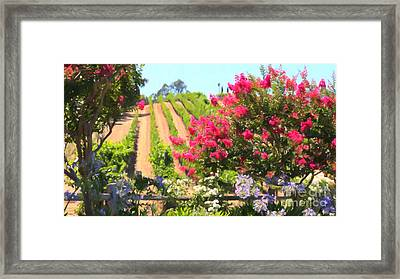 California Vineyard Wine Country 5d24495 Long Framed Print by Wingsdomain Art and Photography