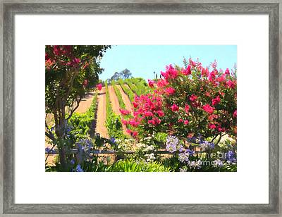 California Vineyard Wine Country 5d24495 Framed Print by Wingsdomain Art and Photography