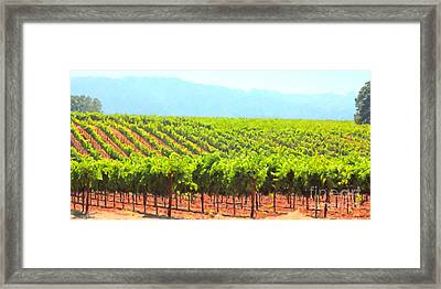 California Vineyard Wine Country 5d24623 Long Framed Print by Wingsdomain Art and Photography