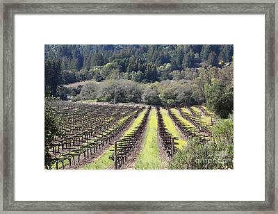 California Vineyards In Late Winter Just Before The Bloom 5d22051 Framed Print by Wingsdomain Art and Photography
