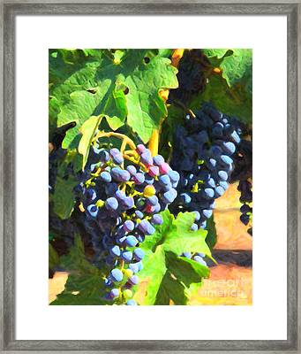 California Wine Country Grape Vine 5d24630 Framed Print by Wingsdomain Art and Photography