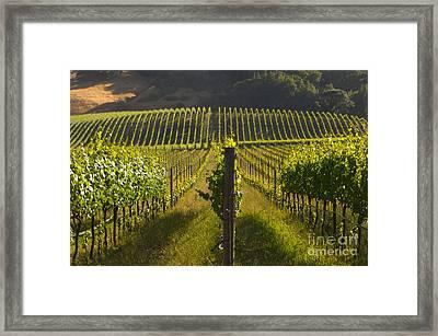 California Wine Grape Vineyard Framed Print by Ron Sanford