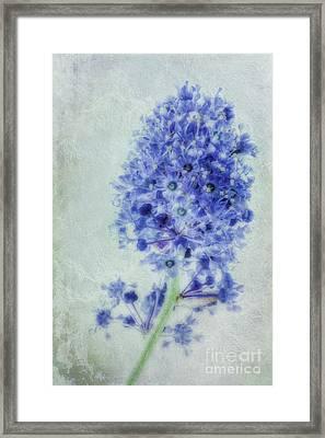 Californian Blue Framed Print by John Edwards
