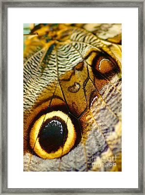 Caligo Atreus Framed Print by Floyd Menezes