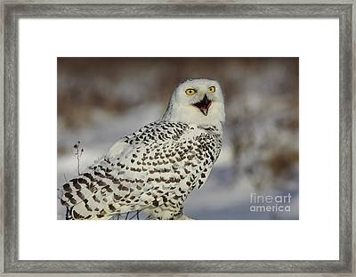 Call Of The North - Snowy Owl Framed Print by Inspired Nature Photography Fine Art Photography