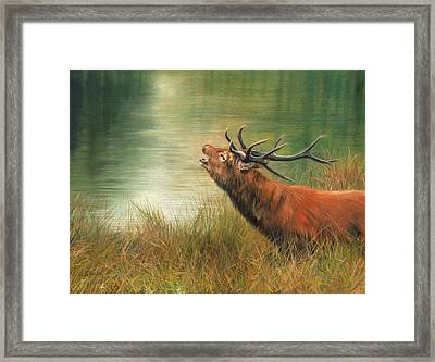 Call Of The Wild 2 Framed Print by David Stribbling