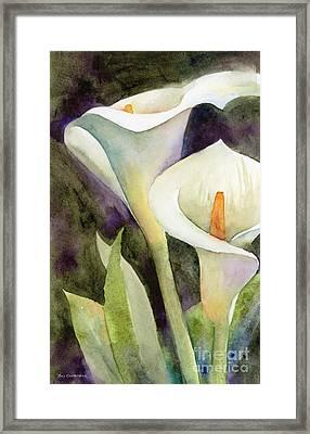 Calla Lilies Framed Print by Amy Kirkpatrick
