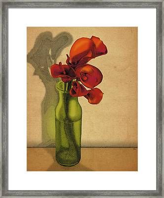 Calla Lilies In Bloom Framed Print by Meg Shearer